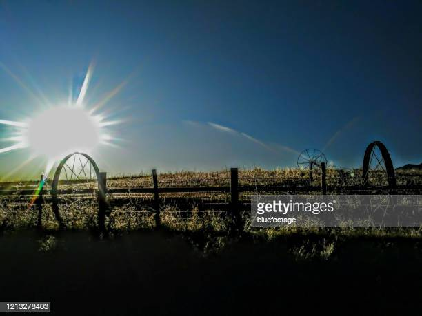 morning sun at a ranch in colorado, irrigation wheels - bluefootage stock pictures, royalty-free photos & images