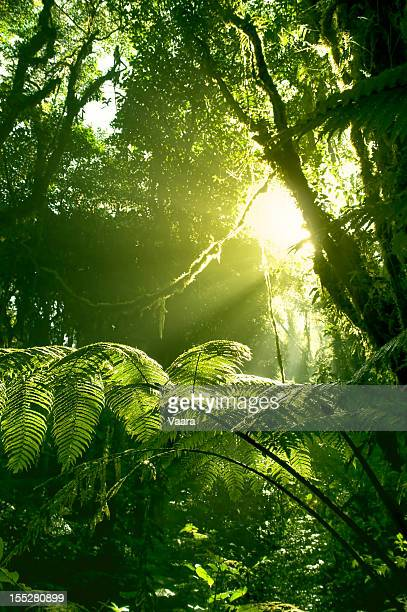 Morning sun in Costa Rican rainforest