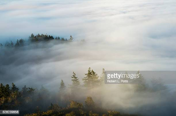 Morning sun lights up the fog; Astoria, Oregon, United States of America