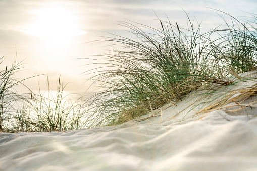 Morning sun over sandy dunes and sea on the island Sylt - gettyimageskorea