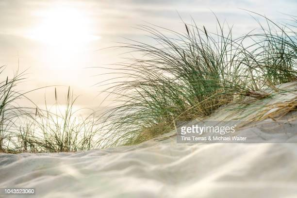 morning sun over sandy dunes and sea on the island sylt - onscherpe achtergrond stockfoto's en -beelden