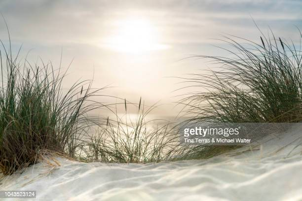 morning sun over sandy dunes and sea on the island sylt - schleswig holstein stock pictures, royalty-free photos & images