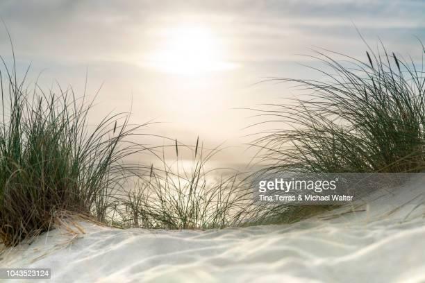 morning sun over sandy dunes and sea on the island sylt - schleswig holstein stock-fotos und bilder