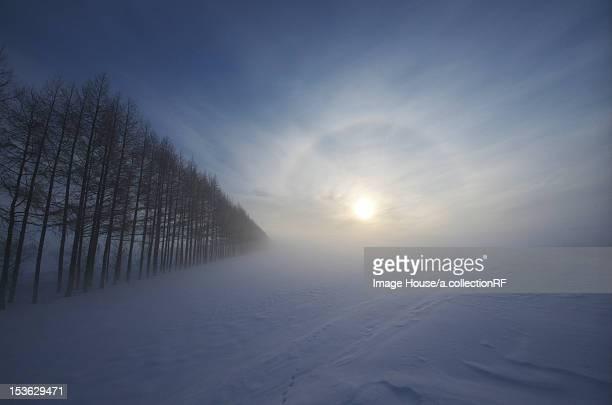 Morning Sun Over Winter Landscape