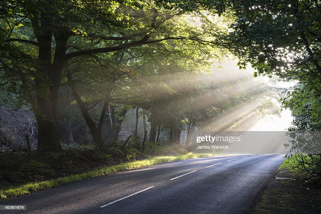 morning sun rays falling on forest road stock photo