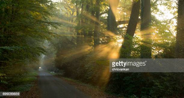 Morning sun though trees, Overijssel, Twente, Holland