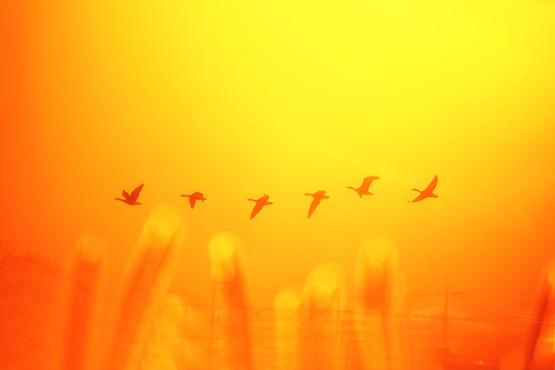 Morning Sunbeam and White-fronted Geese - gettyimageskorea