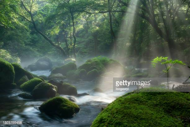 morning sunbeams onto shojinzawa stream - isogawyi stock pictures, royalty-free photos & images
