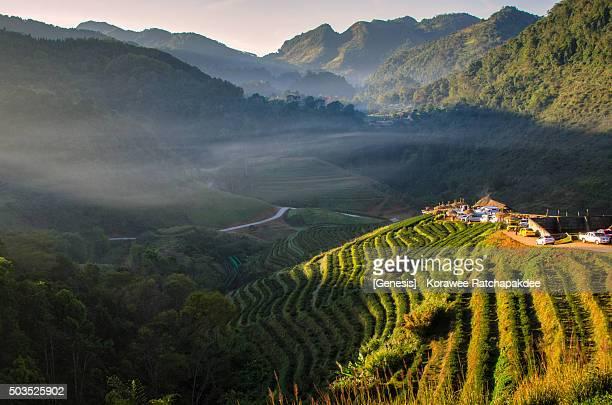 Morning sunrise at the beautiful tea field