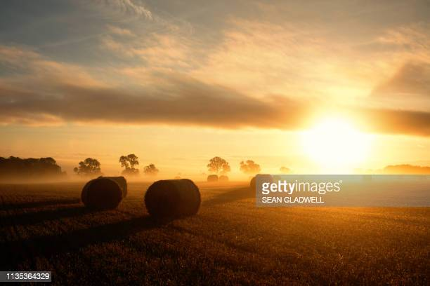 morning sunrise over harvest field - zonsopgang stockfoto's en -beelden