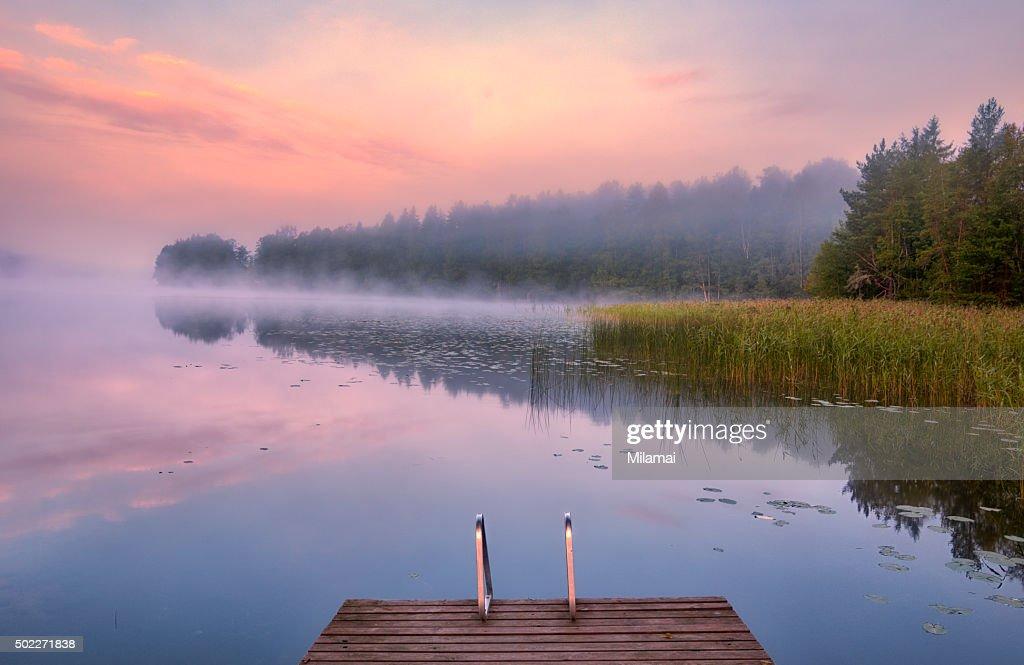 Morning Swim : Stock Photo
