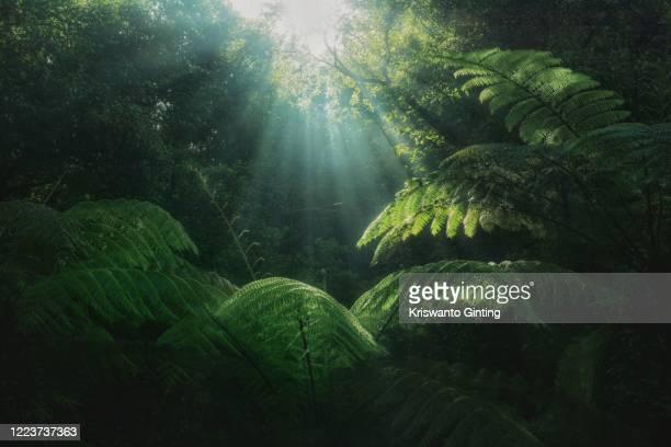 morning therapy - photosynthesis stock pictures, royalty-free photos & images