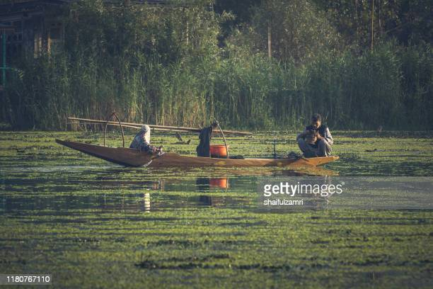morning view from traditional floating market at dal lake, kashmir. - shaifulzamri stock pictures, royalty-free photos & images