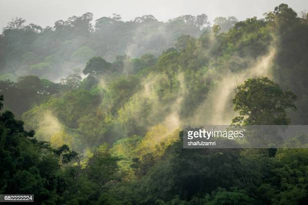 morning view in royal belum rainforest park, it's existence for over 130 million years making it one of the world's oldest rainforest. - shaifulzamri stock pictures, royalty-free photos & images