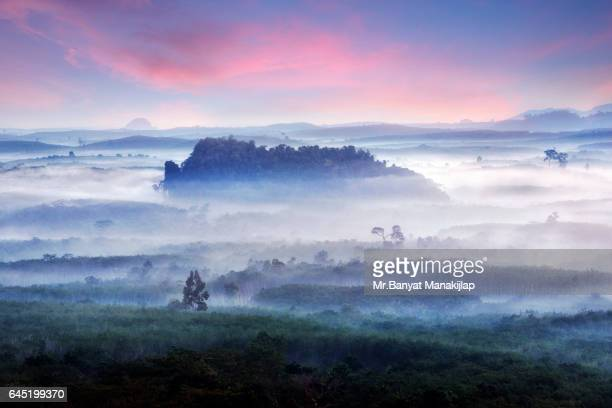 Morning view into landscape full of fog and tree tops