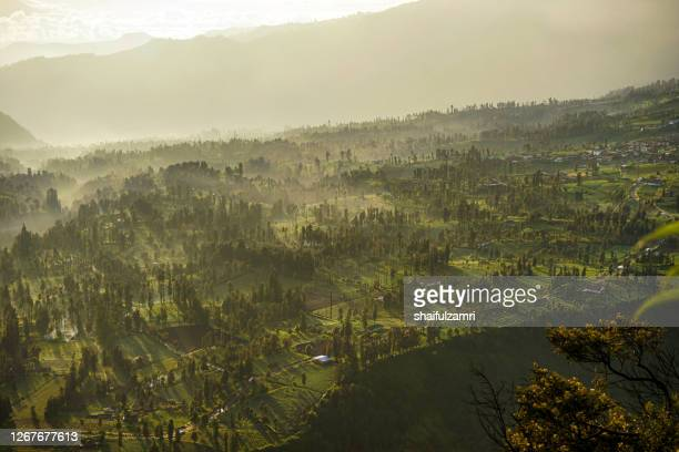 morning view of cemoro lawang - shaifulzamri stock pictures, royalty-free photos & images