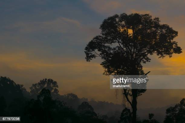 morning view of endau rompin national park, straddling the johor/pahang border, is the second designated national park in peninsular malaysia. it covers an area of approximately 80,000 hectares. - shaifulzamri stock pictures, royalty-free photos & images