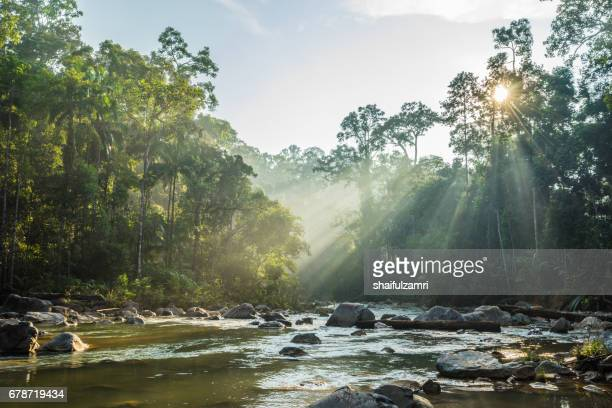 morning view of endau rompin national park, straddling the johor/pahang border, is the second designated national park in peninsular malaysia. it covers an area of approximately 80,000 hectares. - 河川 ストックフォトと画像