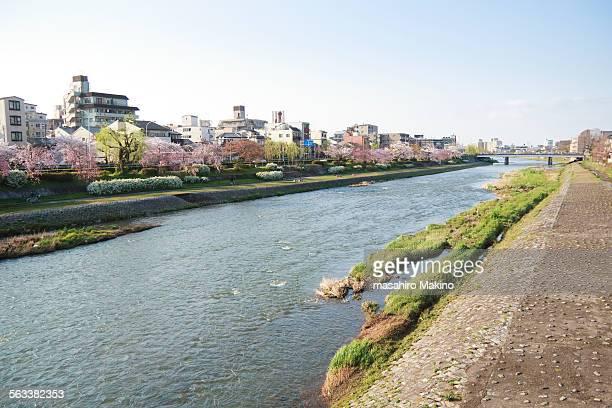 morning view of kamo river - fluss kamo stock-fotos und bilder