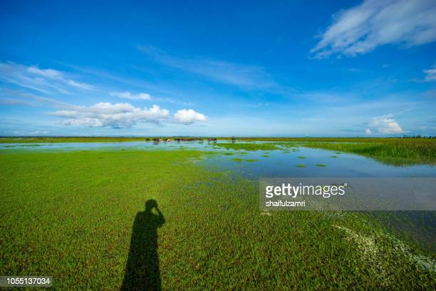 morning view of lake thale noi, phatthalung of thailand. - shaifulzamri stock pictures, royalty-free photos & images