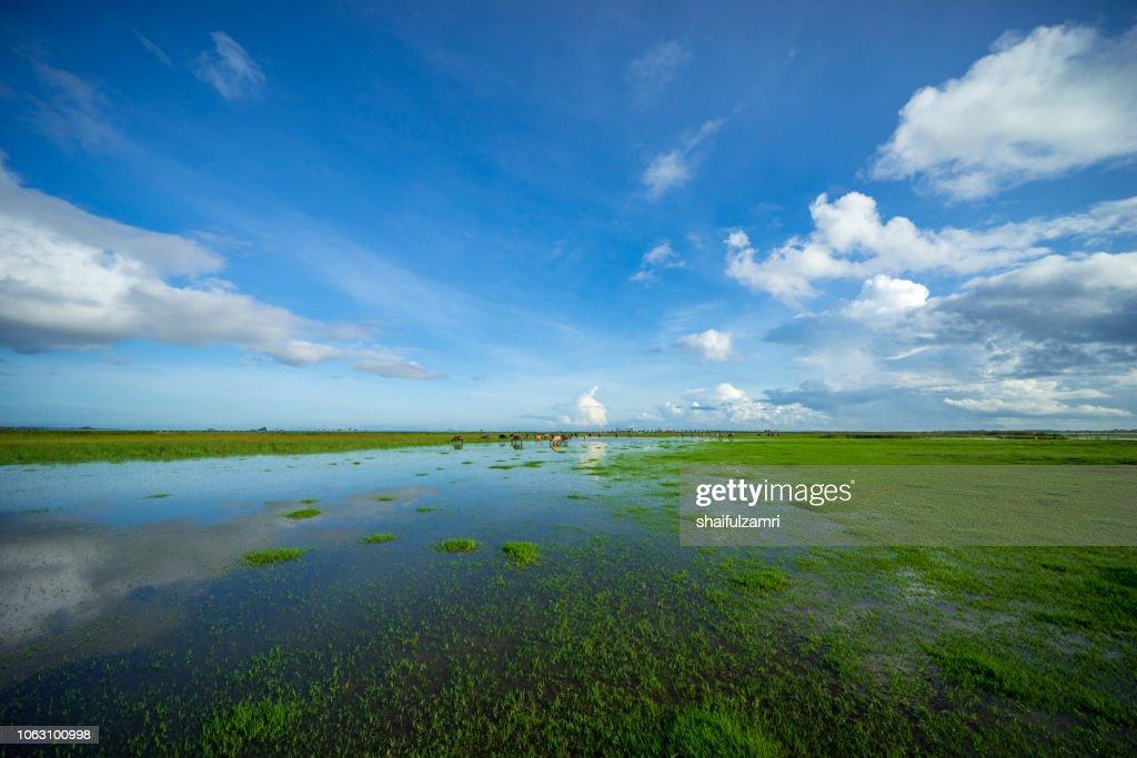 Morning view of lake Thale Noi, Phatthalung, Thailand. : Stock Photo