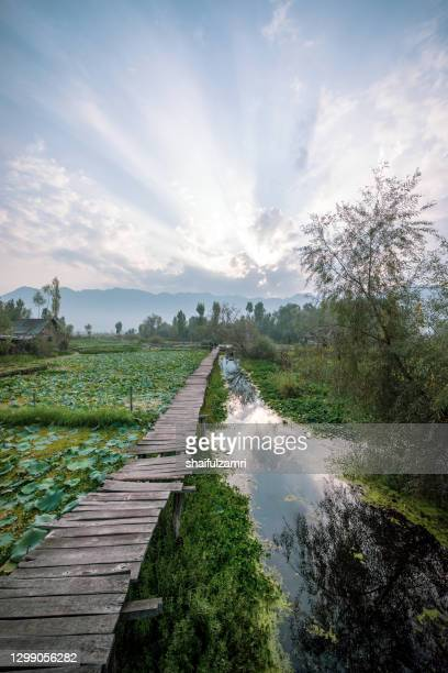 morning view of traditional floating market at dal lake of kashmir, india - shaifulzamri imagens e fotografias de stock