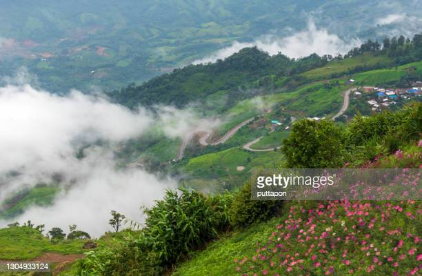 morning view point with mountain mist and with a beautiful flower garden in  phu thap boek, phetchabun province - boek imagens e fotografias de stock