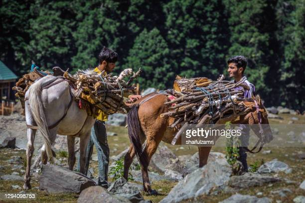 morning view with 2 kashmiri people  at sonamarg valley of kashmir, india. - shaifulzamri stock pictures, royalty-free photos & images