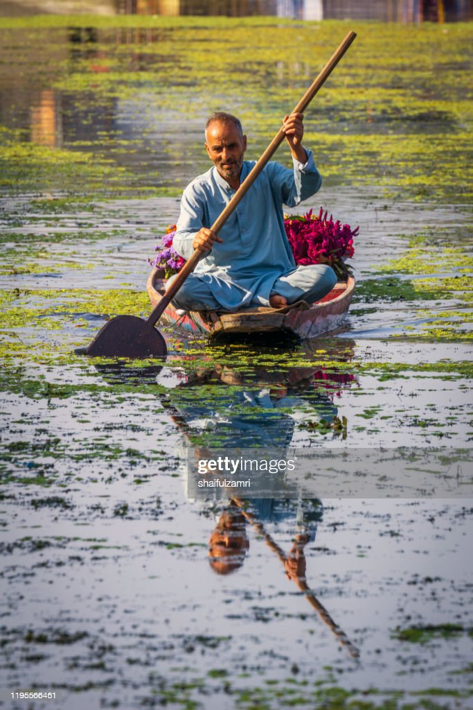 Morning view with man paddling his shikara at Kashmir, India. : Stock Photo