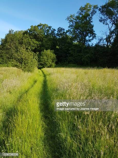 morning walk in sussex agricultural land, fields of springtime green, lush and verdant - national wildlife reserve stock pictures, royalty-free photos & images