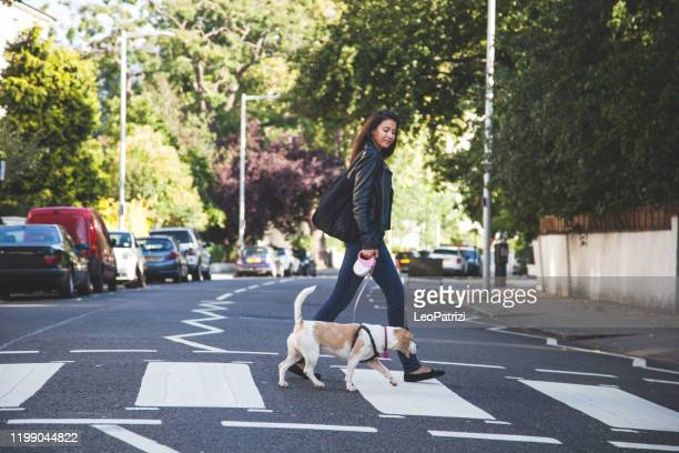 morning walk with dog - london breed stock pictures, royalty-free photos & images