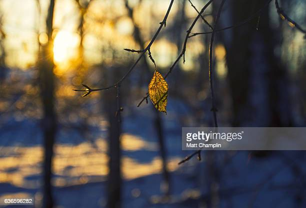 morning winter sunrise - skaneateles lake stock pictures, royalty-free photos & images