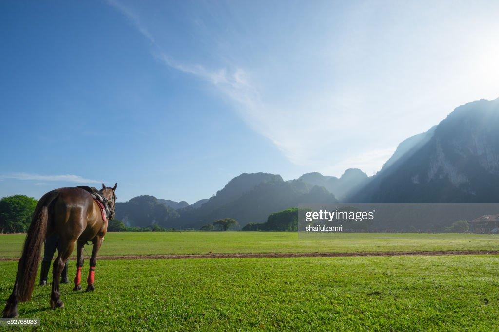 Morning with horse : Bildbanksbilder