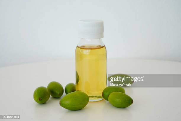 moroccan argan tree nut argania spinosa - argan tree stock pictures, royalty-free photos & images