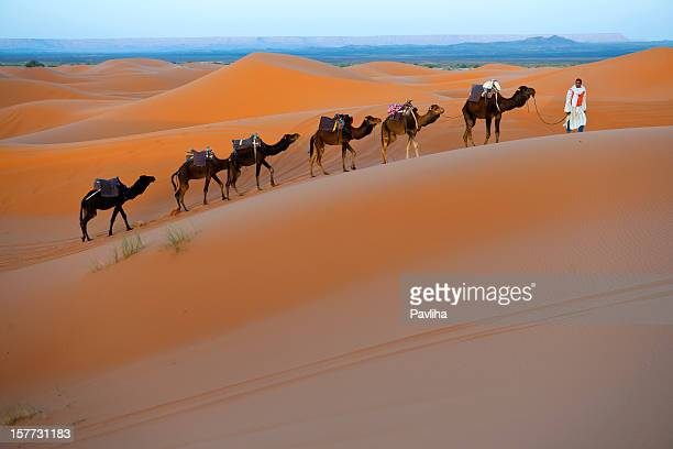 moroccan leading dromedary camels in desert - camel train stock pictures, royalty-free photos & images