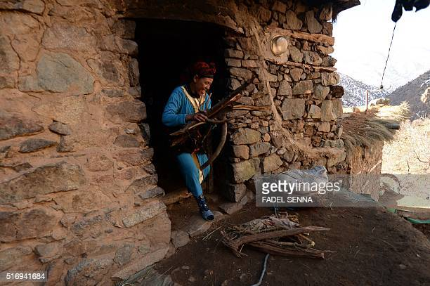 A Moroccan woman collects wood in Taghzirt an isolated village in the elHaouz province in the High Atlas Mountains south of Marrakesh on March 4 2016...