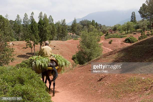 Morocco, Atlas mountains, man riding mule carrying barley on path