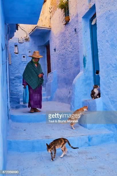 morocco, chefchaouen town, the blue city, street cat - chefchaouen fotografías e imágenes de stock