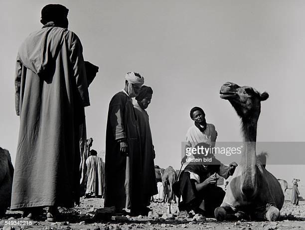 Morocco, Guelimine, Tuareg on camel market.