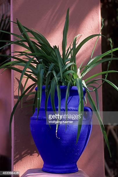Morocco Marrakech Majorelle Garden Flower Pot