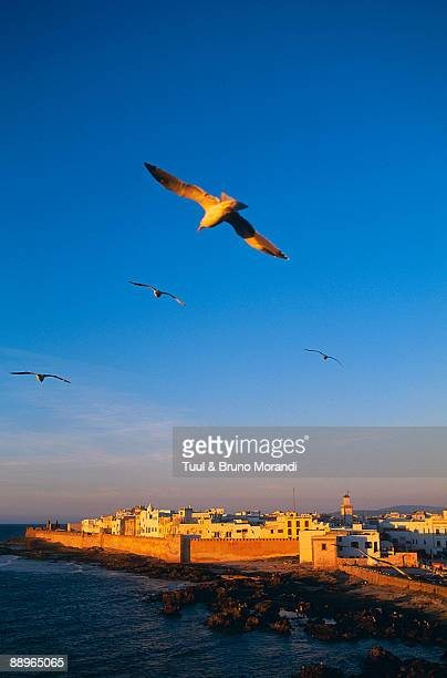 Morocco. Medina of Essaouira. Atlantic coast.