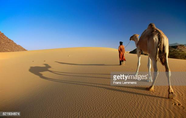 Morocco, Merzouga. Man and Camel at Erg Chebbie