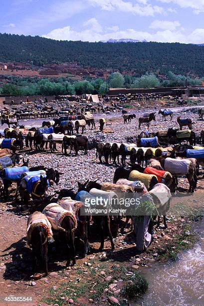 Morocco Near Marrakech Atlas Mountains Ourika Valley Market Donkey Parking Lot