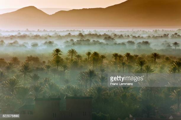 morocco, near zagora, sunrise over oasis and palm trees - maroc photos et images de collection