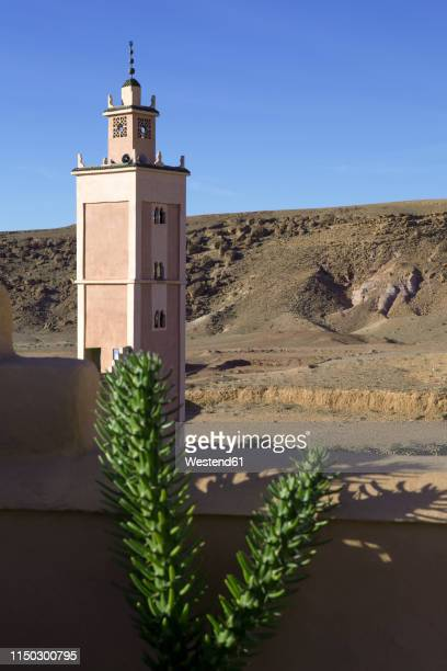 morocco, ounila valley, succulent plant in front of loam wall and minaret - loam stock photos and pictures