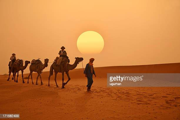 morocco - camel train stock pictures, royalty-free photos & images