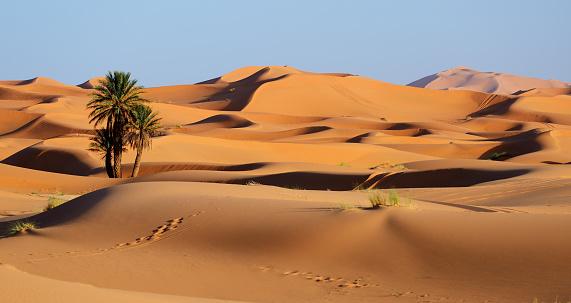 Morocco. Sand dunes of Sahara desert 665139550