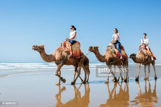 morocco, tanger, group of friends riding camels on the beach - camel train stock pictures, royalty-free photos & images