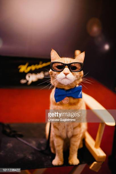 Morris the Cat attends CatCon Worldwide 2018 at Pasadena Convention Center on August 4 2018 in Pasadena California