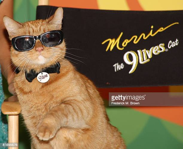 Morris the Cat poses on the set of 'The Price is Right' to kick off a video contest that will give cat lovers an opportunity to get their felines on...